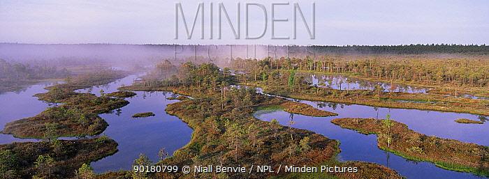 Mannikjarve raba bog, Endla nature reserve, Estonia  -  Niall Benvie/ npl