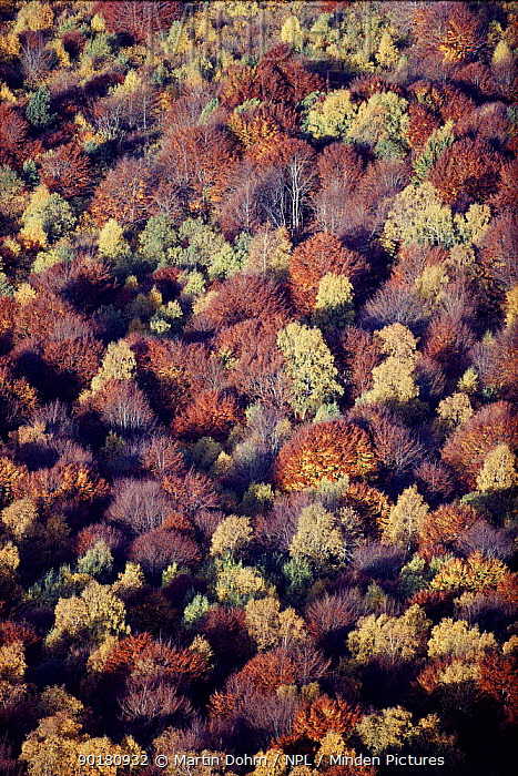 Aerial view of mixed woodland trees in autumn Auvergne, France  -  Martin Dohrn/ npl