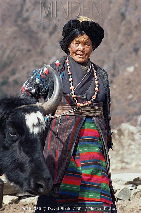 Sherpa woman in national costume with yak, Nepal  -  David Shale/ npl