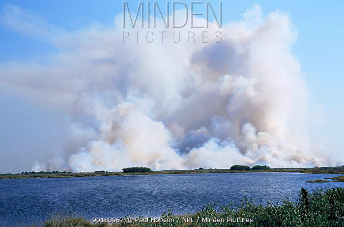 Smoke billowing up from fire in Everglades NP, Florida, USA  -  Paul Hobson/ npl