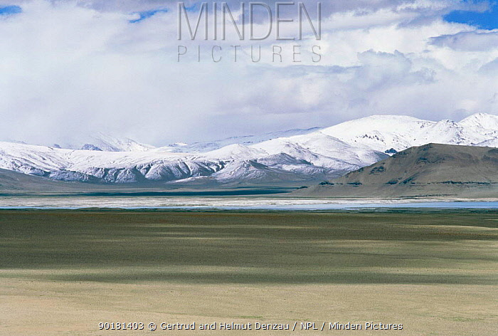 Tibetan Plateau landscape, with snow-capped mountains, Ladakh, North East India  -  Gertrud & Helmut Denzau/ npl