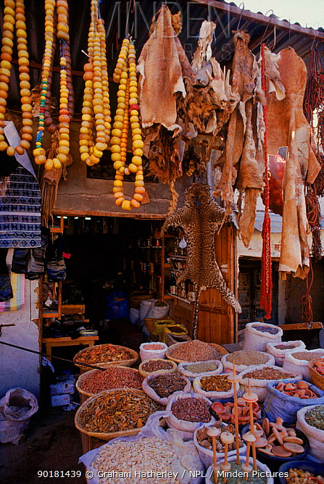 Animal products and skins for sale as medicine Marakesh Morocco, Africa  -  Graham Hatherley/ npl