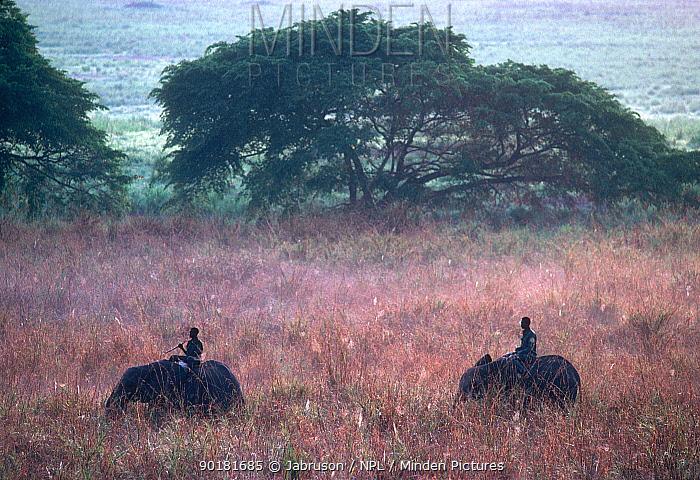 Park guards riding African elephants on patrol, Garamba NP, Republic of Congo  -  Jabruson/ npl