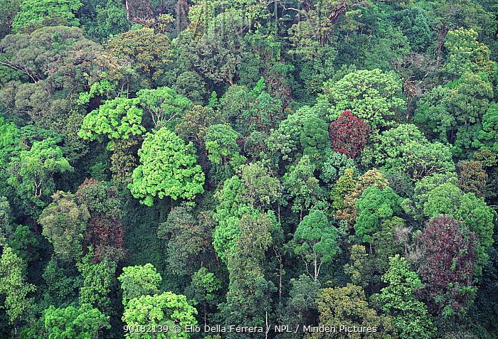 Tropical rainforest canopy Western Ghats Kerala southern India - Elio Della Ferrera/ & Minden Pictures stock photos - Tropical rainforest canopy Western ...