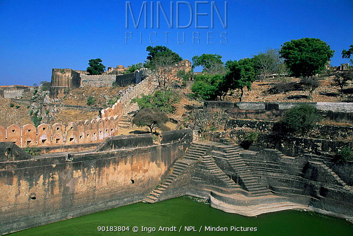 Looking down at Tiger Fort with water reserve, Jaipur, Rajasthan, India  -  Ingo Arndt/ npl