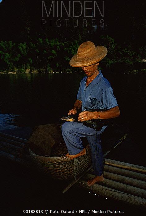 Fisherman tying Cormorant's throat collar (Phalacrocorax carbo) Li River, Guangxi Province China  -  Pete Oxford/ npl