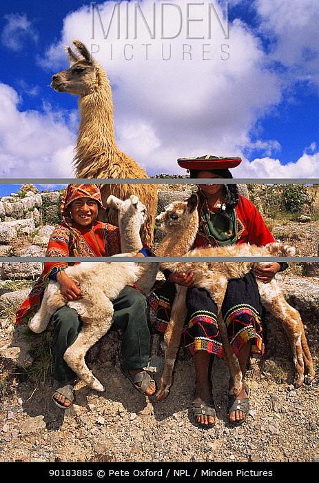 Indian children with domestic Llamas (Lama glama) near Cusco, Peru, South America  -  Pete Oxford/ npl