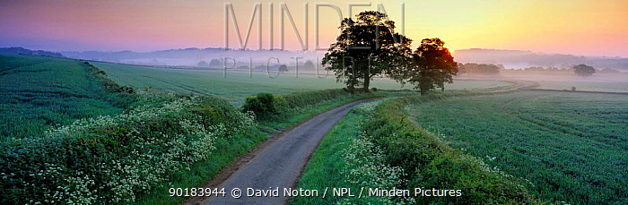 Summer morning over countryside with lane, Compton Pauncefoot, Somerset, UK  -  David Noton/ npl