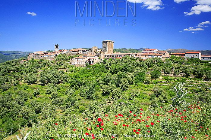 Miranda del Castanar with poppies flowering in foreground, Salamanca, Spain  -  Jose B. Ruiz/ npl