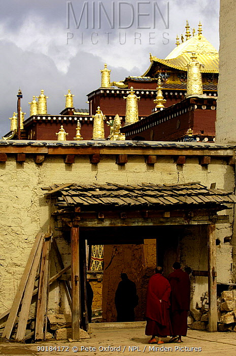 Monks at Songzhanling Monastery, a Yellow Hat Tibetan sect monastery, founded in the 17th century Zhongdian, Deqin Tibetan Autonymous Prefecture, Yunnan Province, China 2006  -  Pete Oxford/ npl