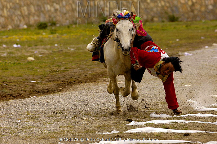 Horse and rider competing in Grabbing scarves event at the Horse Racing Festival or 'Heavenly Steed Festival' Zhongdian, Deqin Tibetan Autonymous Prefecture, Yunnan Province, China 2006  -  Pete Oxford/ npl
