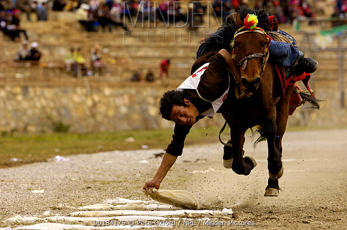 Horse and rider competing in Grabbing scarves event at the Horse Racing Festival or 'Heavenly Steed Festival' Zhongdian, Deqin Tibetan Autonymous Prefecture, Yunnan Province, ChinaPrefecture, Yunnan Province, China 2006  -  Pete Oxford/ npl