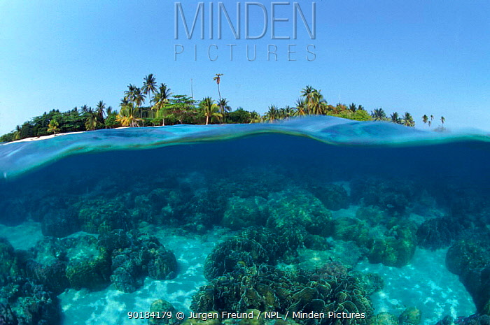 Split-level shot of coral reef and shore, Phillippines  -  Jurgen Freund/ npl