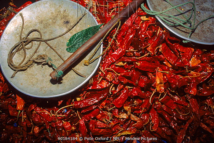 Chillies and weigh scale at Thimphu market, capital city Central Bhutan  -  Pete Oxford/ npl