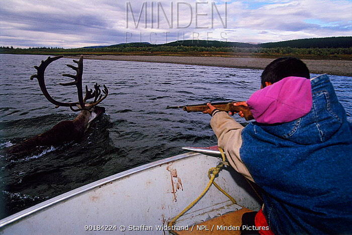 Boy about to shoot his first caribou (Rangifer tarandus), Kobuk Valley NP, Alaska, USA  -  Staffan Widstrand/ npl