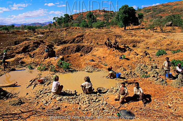 Gold mining near Daraine, Madagascar, threat to natural habitat of Tattersalli sifaka  -  Pete Oxford/ npl