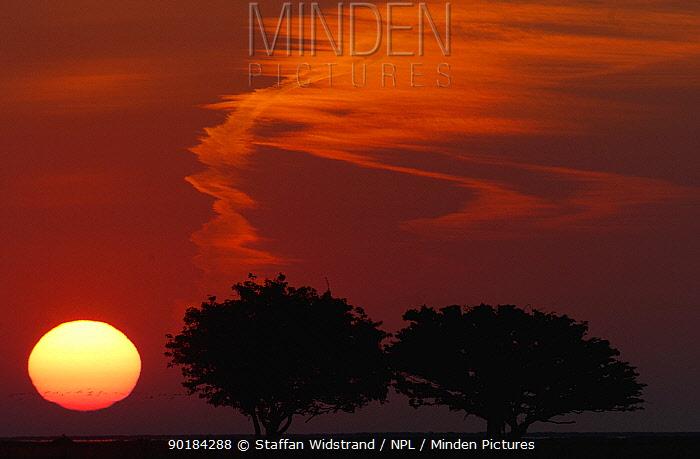 Alvaret World Heritage Area at sunset, Ottenby, Oland, Sweden  -  Staffan Widstrand/ npl