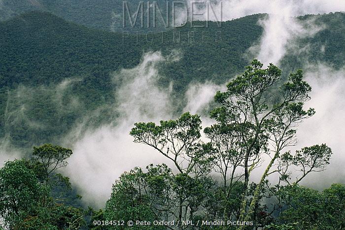 Podocarpus National Park, Andes, Ecuador  -  Pete Oxford/ npl
