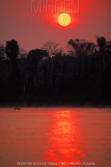 Sunrise over primary lowland rainforest, Manu National Park, Peru  -  David Tipling/ npl