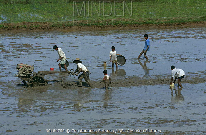 Farm workers with tractor preparing rice field for planting rice, Central Sulawesi, Indonesia 2000  -  Constantinos Petrinos/ npl
