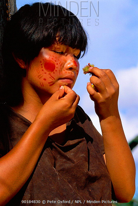Campa indian painting her face with achiote, Lower Urubamba river, Amazonia, Peru  -  Pete Oxford/ npl