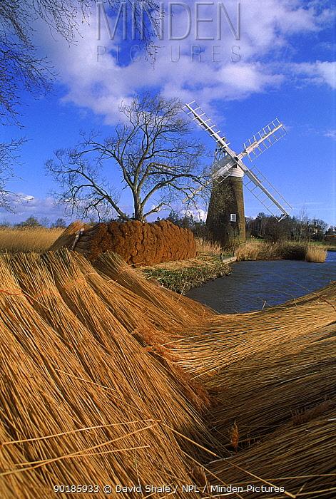 Bundled reeds and windmill, How Hill, Norfolk, England  -  David Shale/ npl