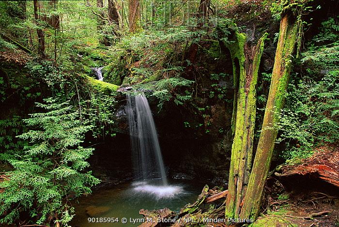 Waterfall at Big Basin Redwoods NP, California, USA  -  Lynn M. Stone/ npl