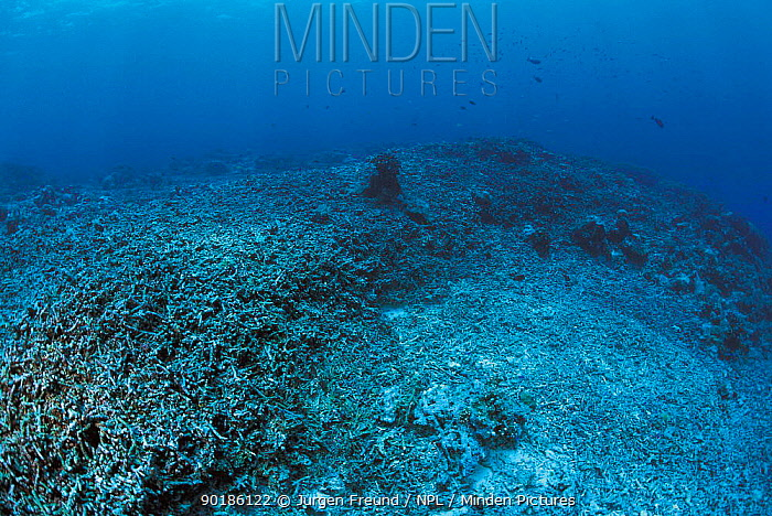 Coral reef blasted by dynamite fishing, Philippines  -  Jurgen Freund/ npl