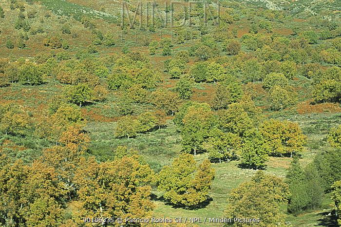 Sierra Gredos, Pyrenees, Spain  -  Patricio Robles Gil/ npl