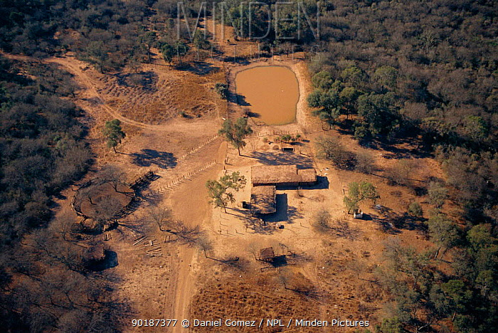 Aerial view of settler's outpost with surrounding area overgrazed by cattle and goats Dry Chaco, Argentina almost 80% of Dry Chaco is affected by overgrazing altering its structure and species composition  -  Daniel Gomez/ npl