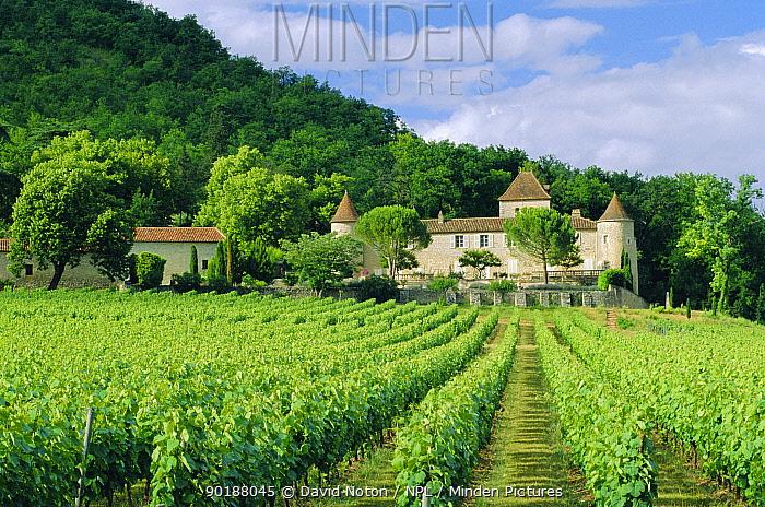 Vineyard and chateau, Lot valley, Perigord, France  -  David Noton/ npl