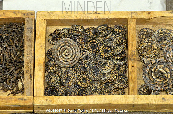 Dried snakes on sale for medicine purposes, Beijing, China  -  David Tipling/ npl