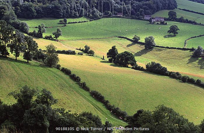 Farmland landscape Cotswolds, Glos, England  -  Nick Turner/ npl