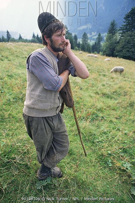 Romanian shepherd watching sheep, Girchin, Carpathian mountains, Romania  -  Nick Turner/ npl