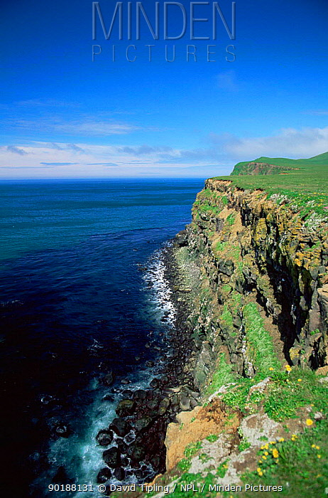 The West cliffs bird breeding area, St Paul, Pribilof Islands, Bering Sea, Alaska, USA  -  David Tipling/ npl