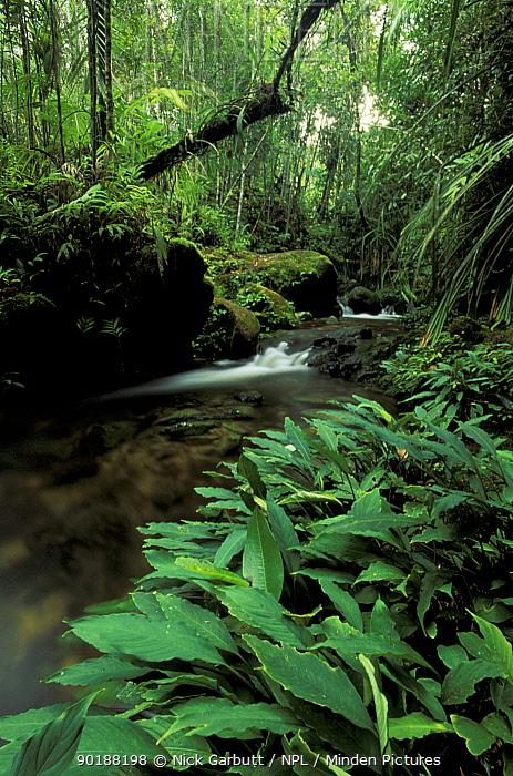 Stream in montane rainforest on slopes of Mount Kinabalu, Sabah, Borneo  -  Nick Garbutt/ npl