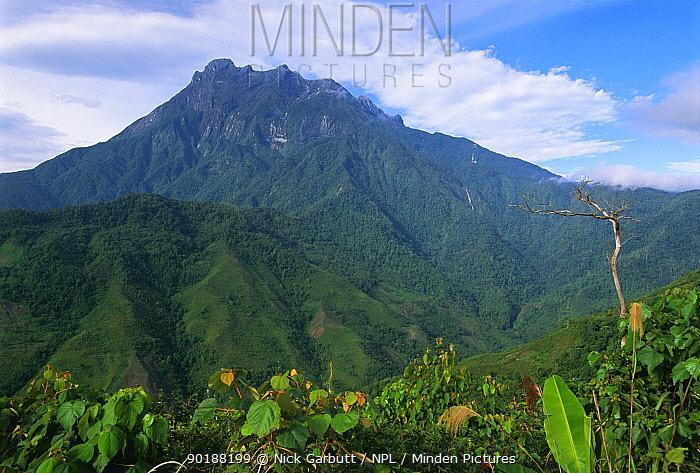 Mt Kinabalu (4095 m) Sabah, Borneo, Malaysia  -  Nick Garbutt/ npl