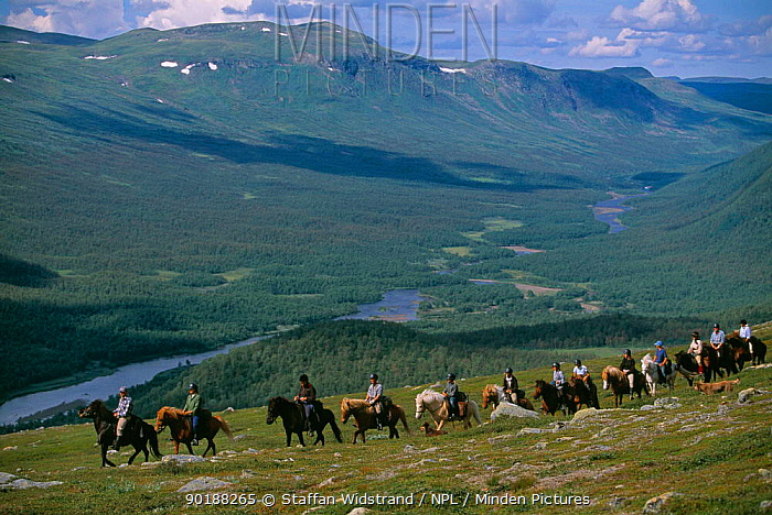 Horse riding, Icelandic horses, Ammarnas, Vindelfjallen NR, Lapland, Sweden  -  Staffan Widstrand/ npl