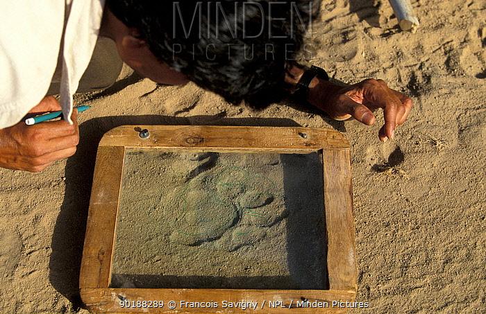 Guard studying Bengal tiger pug marks (Panthera tigris tigris) Bandhavgarh NP India 1999,  -  Francois Savigny/ npl