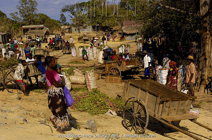 Sakalava people at weekly village market Nr Ankarana Special Reserve in NW MADAGASCAR 2005  -  Pete Oxford/ npl