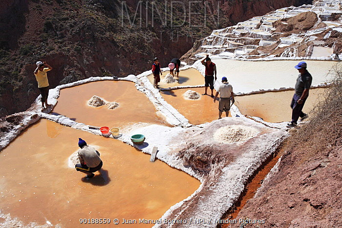 Indian men and woman working at the salt pools, Maras, Peru 2006  -  Juan Manuel Borrero/ npl