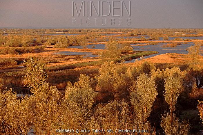 Slonsk reserve, Poland, Europe  -  Artur Tabor/ npl