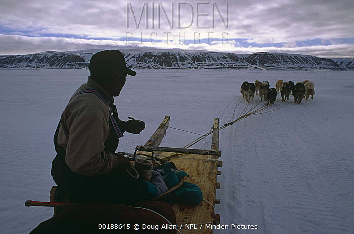 Inuit sledge being pulled by huskies, Lancaster Sound, Canadian Arctic  -  Doug Allan/ npl