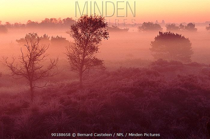 Mist at dawn, Kalmthoutse Heide, Kalmthout, Belgium, Europe  -  Bernard Castelein/ npl