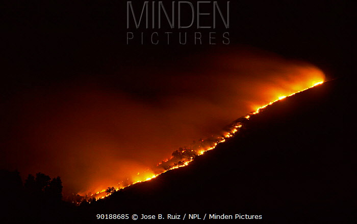 Hillside on fire at night, Mediterranean, Spain  -  Jose B. Ruiz/ npl