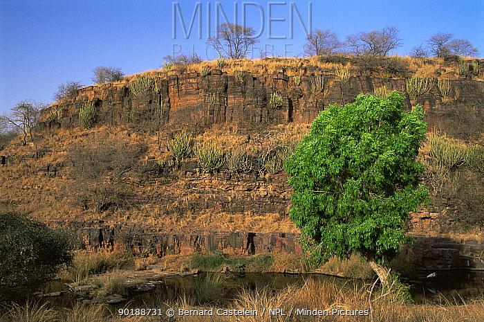Tropical dry forest habitat in Lakarda Valley, Ranthambhore NP, Rajasthan, India  -  Bernard Castelein/ npl
