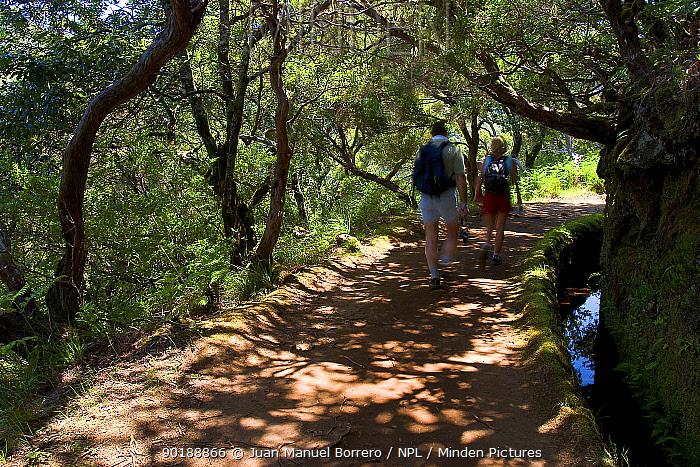 Walkers on Levada do Risco, Laurisilva wood, Ribeira de Janela, Madeira  -  Juan Manuel Borrero/ npl