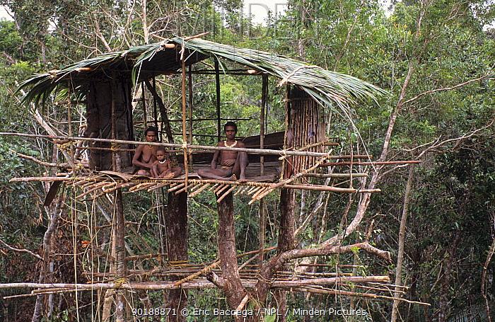 A Korowai family recently installed in their new tree house, Western Papuasia, former Irian-Jaya, Indonesia 1999, 2000 (West Papua)  -  Eric Baccega/ npl