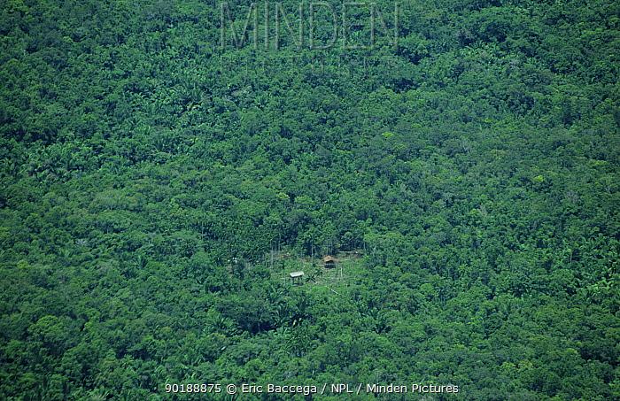 Traditional Korowai house in the rainforest, Western Papuasia, Indonesia 1999, 2000 (West Papua)  -  Eric Baccega/ npl