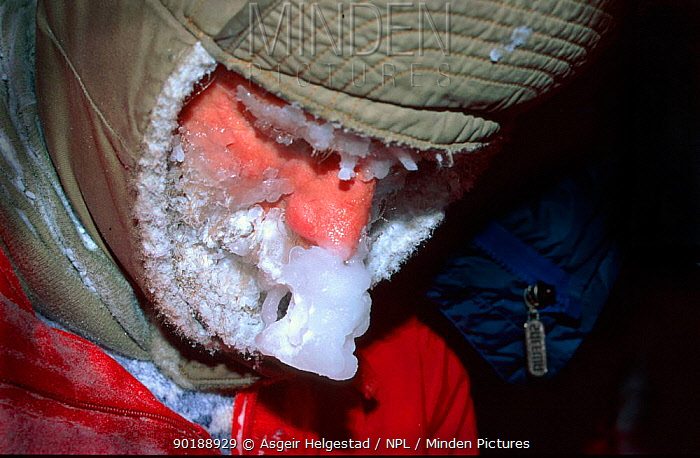 DMan with frozen face after 45 mins in snowstorm Agardh, Spitsbergen, Norway  -  Asgeir Helgestad/ npl